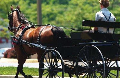 Häst & Vagn Picknick för Två