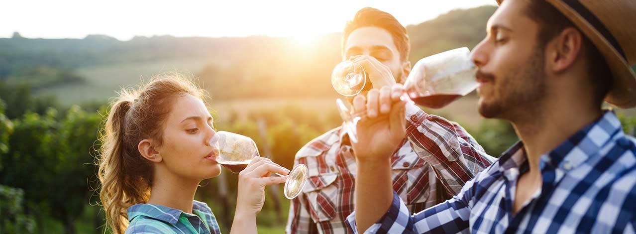 Produktbild för Gör eget vin (1/1)