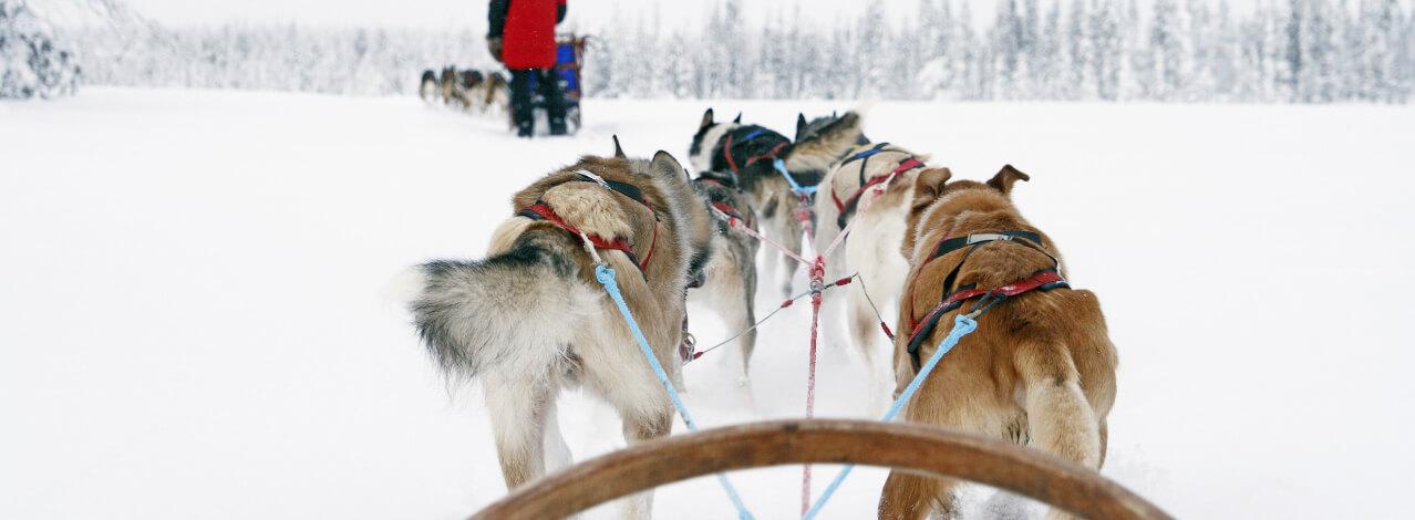 Produktbild för Hundspann i Åre (1/1)