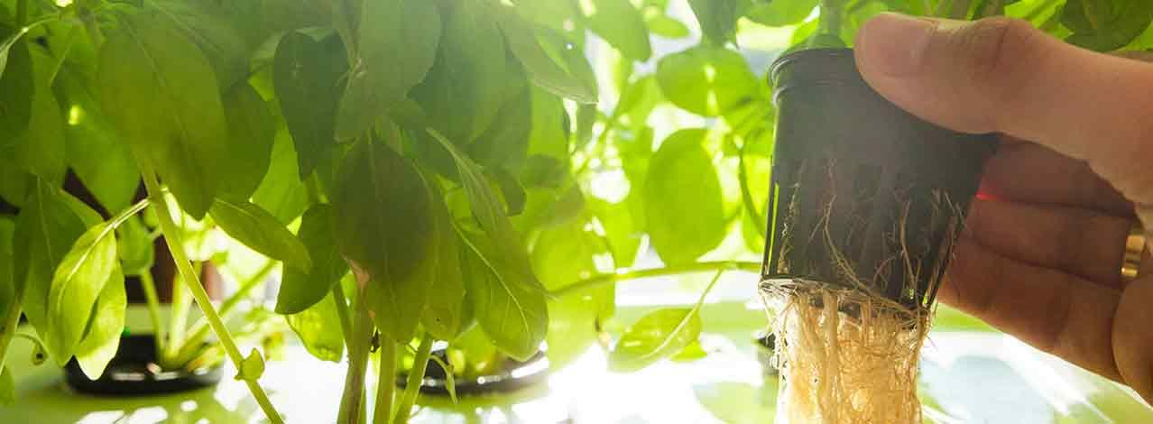 Produktbild för Kurs i hydroponisk odling (1/1)